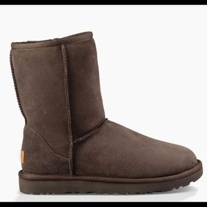 Classic Ugg Boots Short - Chocolate 6